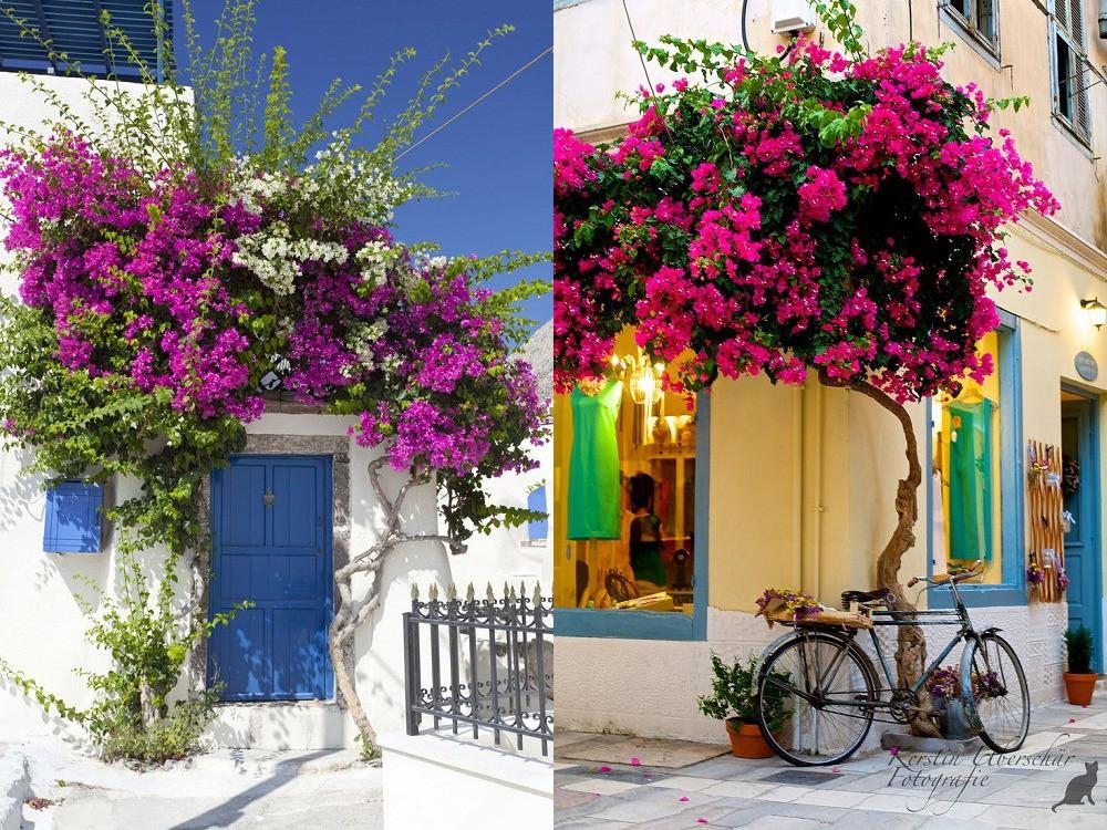 Trồng 7 loại cây có hoa này để ngôi nhà mát lịm trong những ngày nóng như đổ lửa - Ảnh 3.