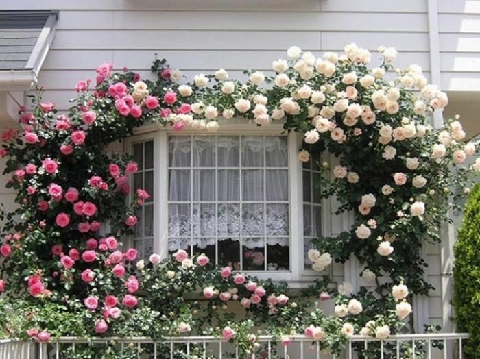 Trồng 7 loại cây có hoa này để ngôi nhà mát lịm trong những ngày nóng như đổ lửa - Ảnh 8.