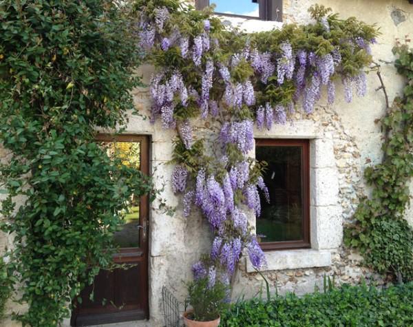 Trồng 7 loại cây có hoa này để ngôi nhà mát lịm trong những ngày nóng như đổ lửa - Ảnh 4.