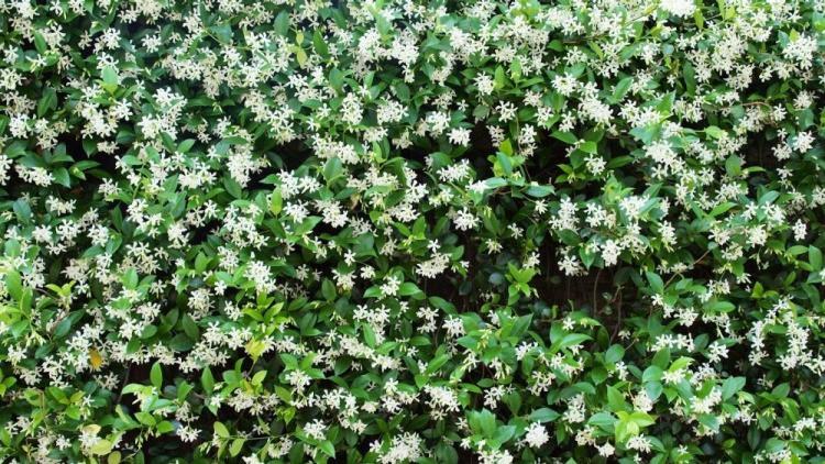 Trồng 7 loại cây có hoa này để ngôi nhà mát lịm trong những ngày nóng như đổ lửa - Ảnh 16.