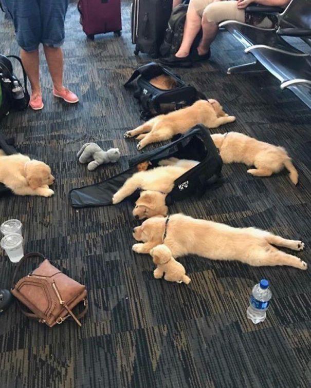 Tổng hợp những hình ảnh kỳ thú chỉ có ở sân bay - Ảnh 15.