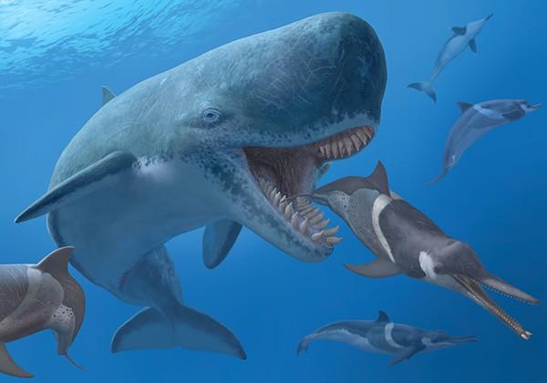 Liệu ngoài đời thật siêu cá mập Megodolon có thể cắn gẫy đôi một chiếc thuyền nặng hàng tấn không? - Ảnh 4.