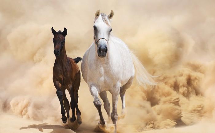 Không có ngựa lớn dẫn dắt, ngựa con rất khó dạy.
