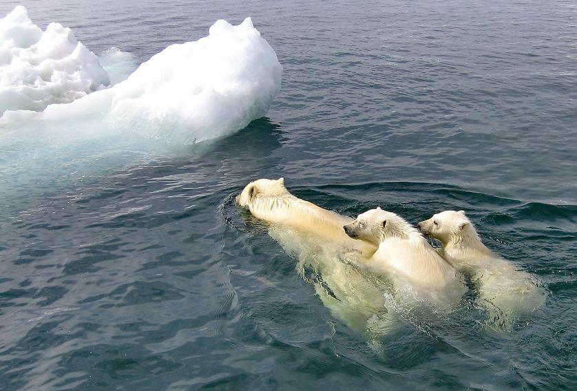 Mỗi năm lại có hàng chục nghìn con hải mã mắc kẹt trên bãi biển Alaska - lý do là gì? - Ảnh 3.
