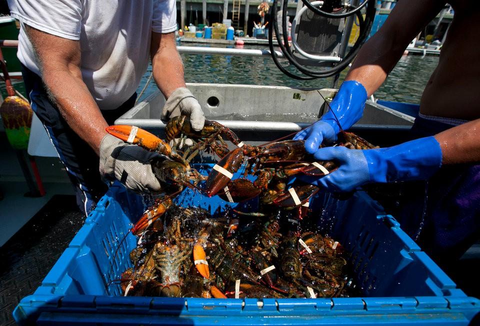 Lý do tại sao tôm hùm Mỹ lại trở thành một trong những món ăn sang chảnh nhất thế giới - Ảnh 2.