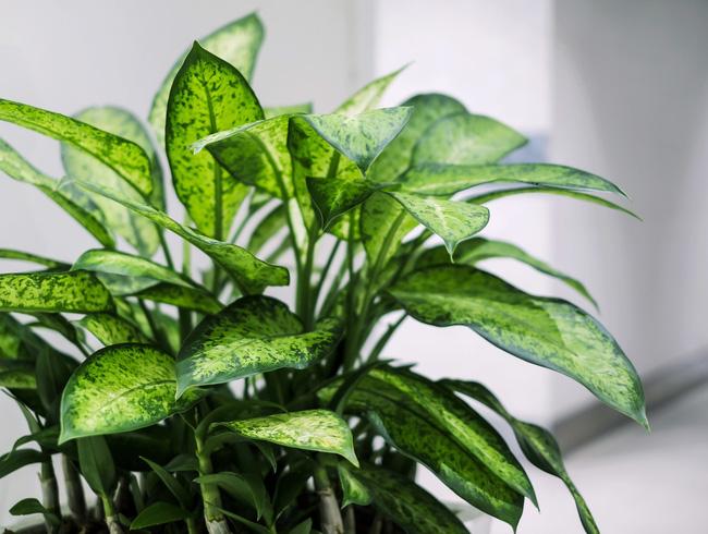 10 loại cây cảnh đẹp, dễ mua lại có tác dụng loại bỏ độc tố trong nhà - Ảnh 7.
