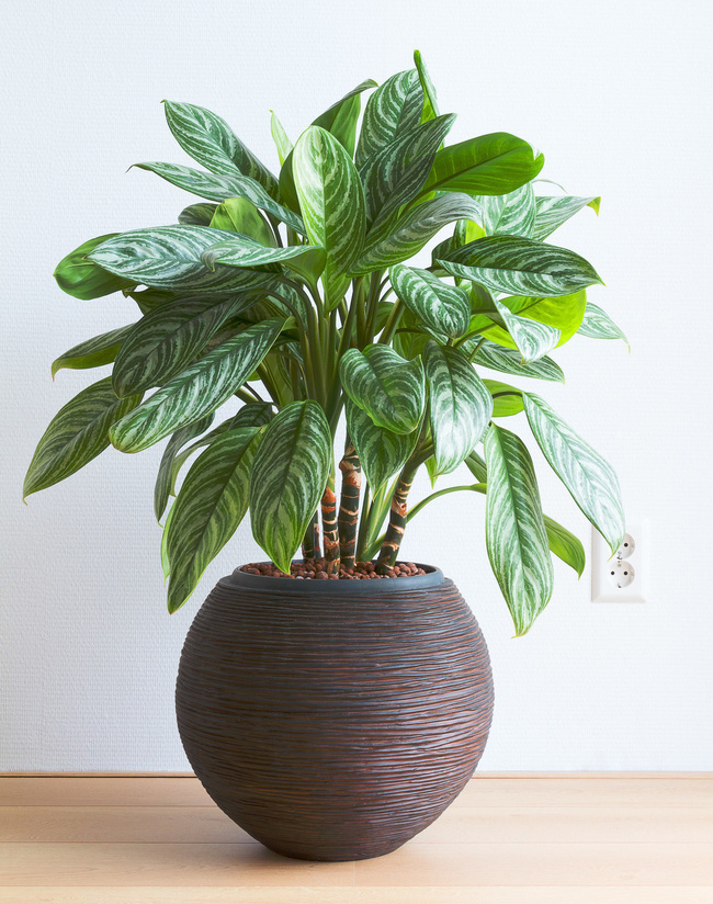 10 loại cây cảnh đẹp, dễ mua lại có tác dụng loại bỏ độc tố trong nhà - Ảnh 10.