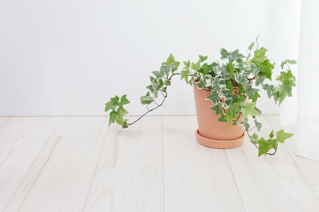 10 loại cây cảnh đẹp, dễ mua lại có tác dụng loại bỏ độc tố trong nhà - Ảnh 2.