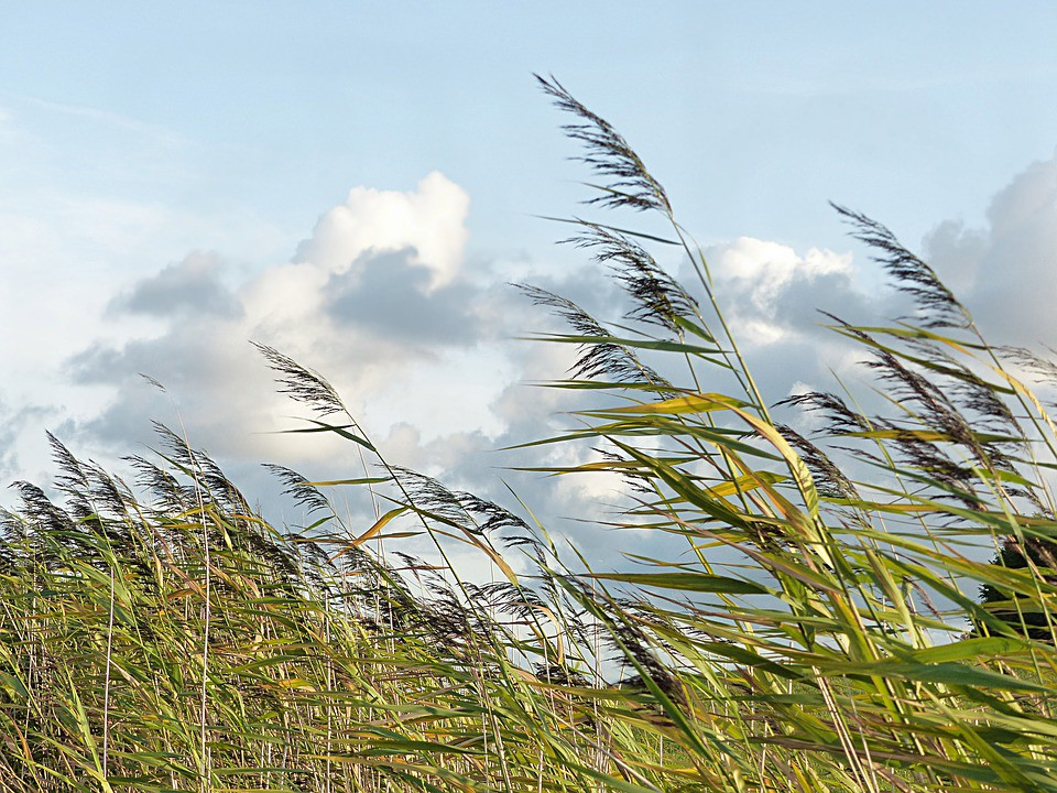 Hỏi khó: Dép lào, gió lào, thuốc lào có phải đến từ nước Lào hay không? - Ảnh 4.