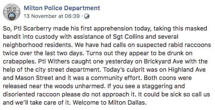 Mỹ: Đàn chồn tiệc tùng say xỉn làm người dân hoảng sợ, cảnh sát phải bắt bừa hai con làm gương đến khi tỉnh rồi mới thả - Ảnh 2.