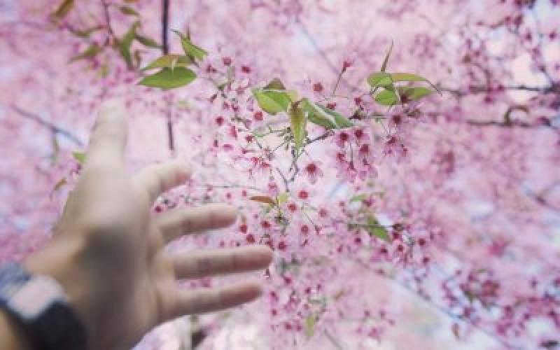 Người chưa có gì trong tay, kẻ mong mình một bến bờ yên ổn, nên đành buông tay nhau!