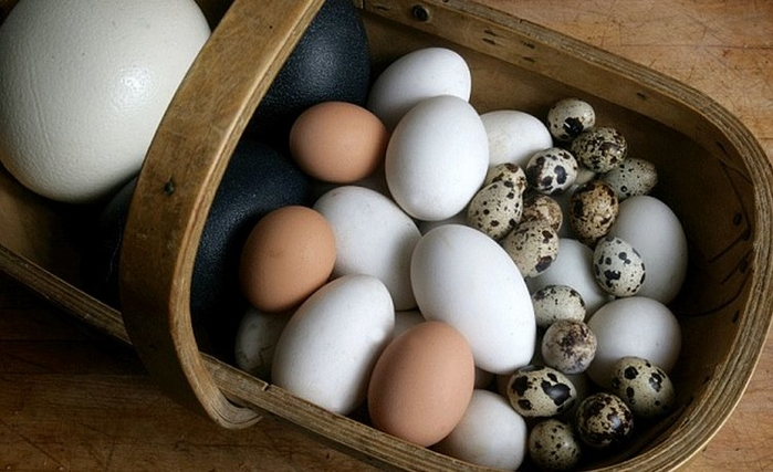 Trứng vịt, trứng gà, trứng cút - trứng nào giàu dinh dưỡng hơn?