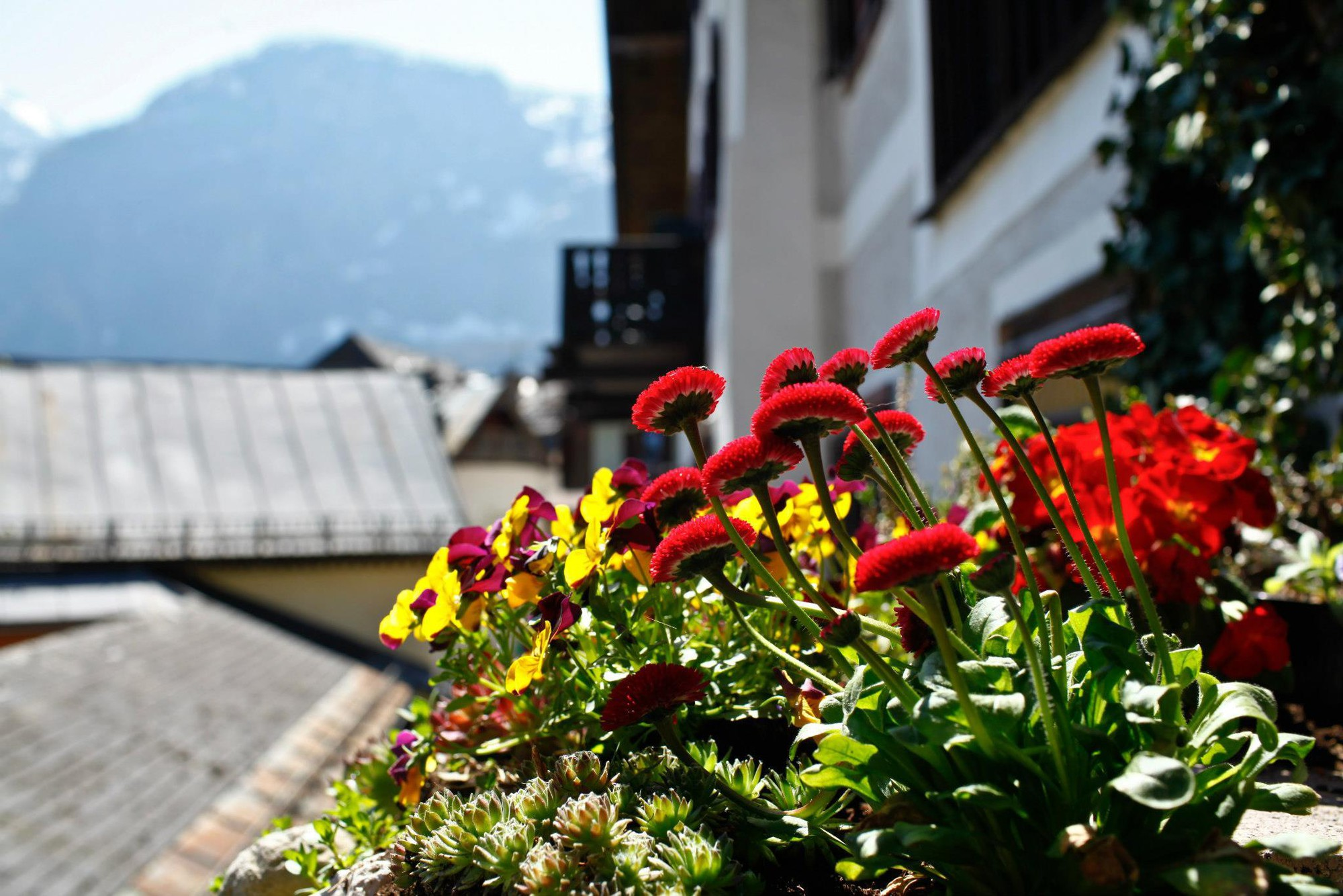 austria-hallstatt-flowers