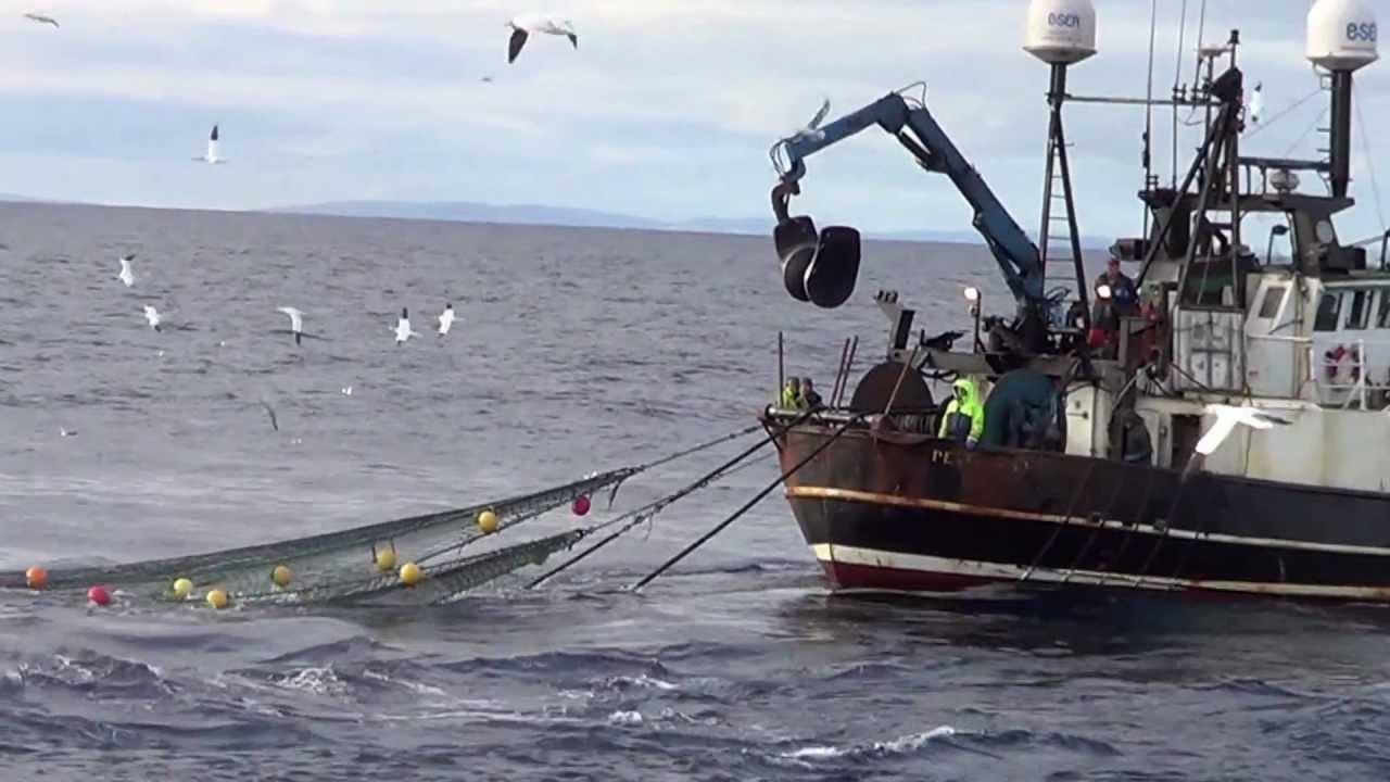 Không có dụng cụ, 2 học sinh cấp III ở Nhật tay không đấm ngất con cá ngừ nặng 1 tạ - Ảnh 1.