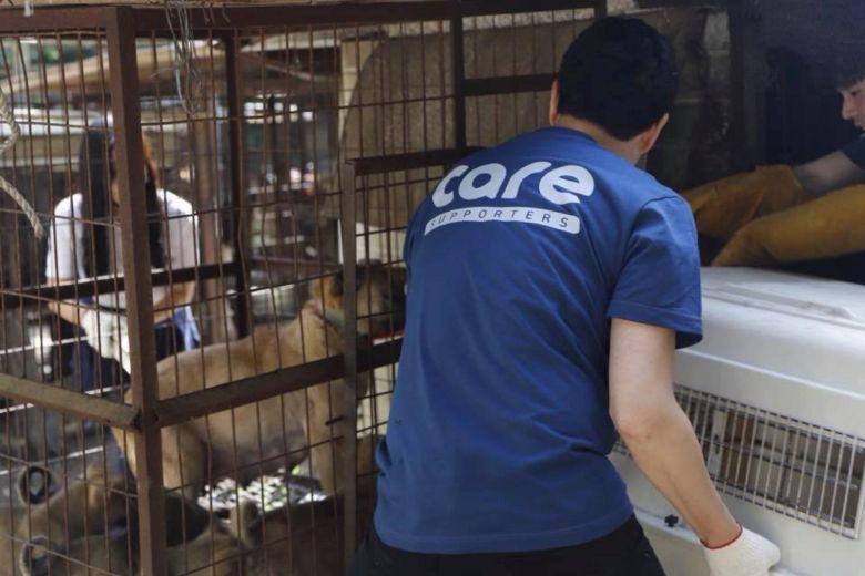 Tổ chức bảo vệ động vật hàng đầu Hàn Quốc bị tố giết hại hàng trăm con chó để kiếm thêm tiền quyên góp - Ảnh 1.