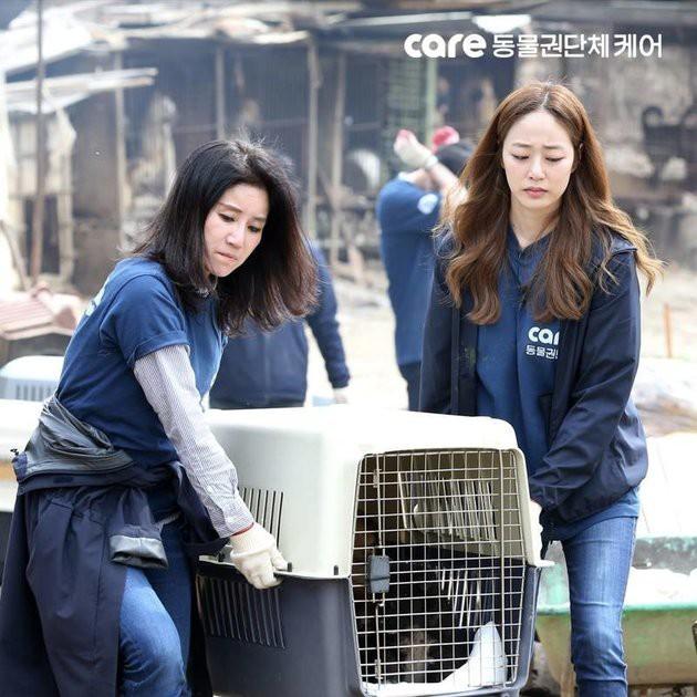 Tổ chức bảo vệ động vật hàng đầu Hàn Quốc bị tố giết hại hàng trăm con chó để kiếm thêm tiền quyên góp - Ảnh 3.