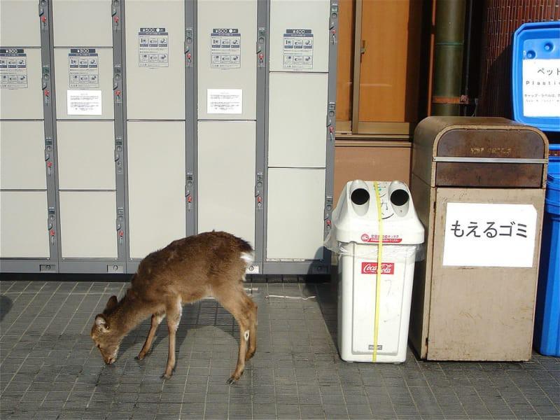 15 điều vừa tiện vừa lạ ở Nhật khiến du khách sành điệu nhất cũng không dám nói mình hiểu hết đất nước này - Ảnh 30.