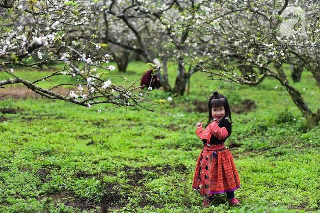 Ngược lên Mộc Châu tháng hai mùa xuân, ngắm hoa mận nở trắng trời - Ảnh 9.