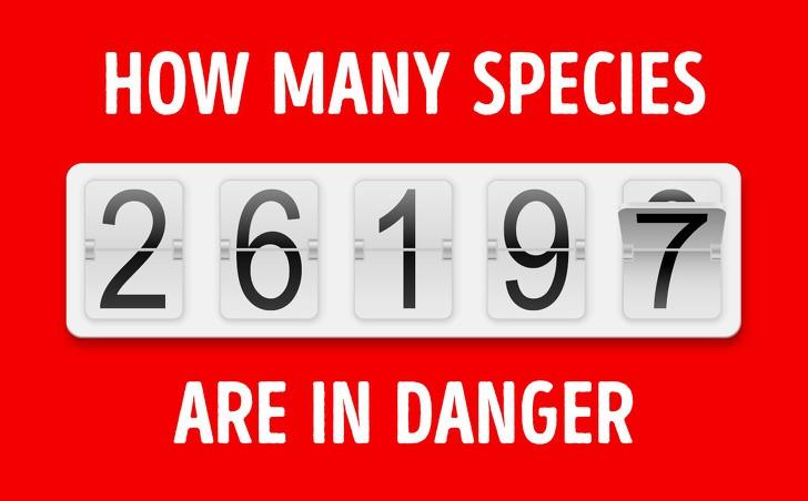 Số liệu cho thấy loài người đã làm gì: Chúng ta không còn được trông thấy những loài vật này nữa - Ảnh 1.