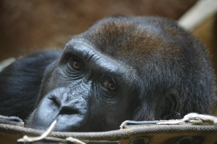 Số liệu cho thấy loài người đã làm gì: Chúng ta không còn được trông thấy những loài vật này nữa - Ảnh 3.