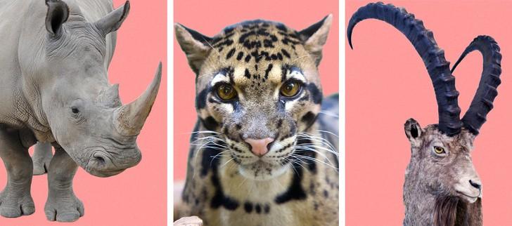 Số liệu cho thấy loài người đã làm gì: Chúng ta không còn được trông thấy những loài vật này nữa - Ảnh 2.