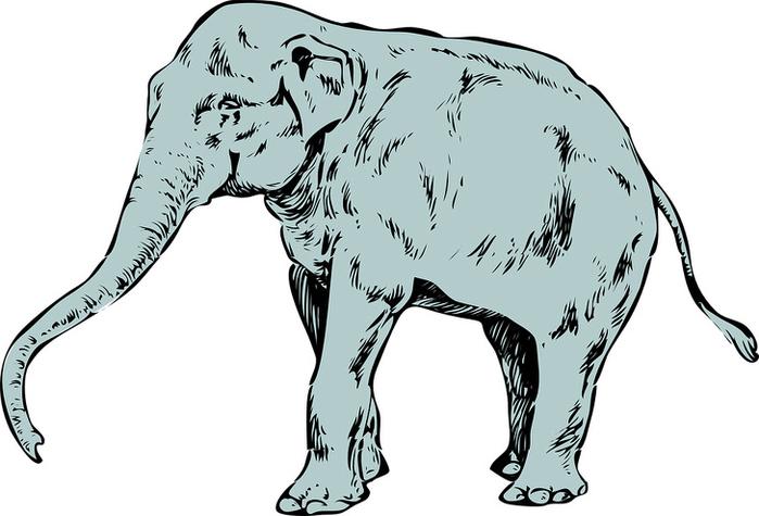 Bạn nhìn thấy con vật nào đầu tiên, điều đó sẽ nói lên tính cách