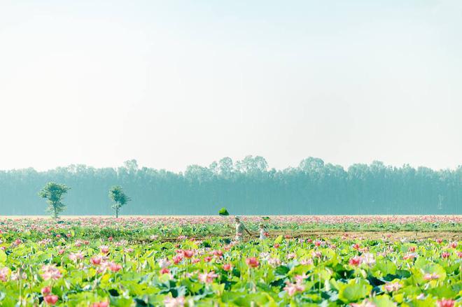 Đã lùng ra địa chỉ cánh đồng sen rộng bát ngát tại An Giang: Thiên đường sống ảo là đây chứ đâu nữa! - Ảnh 5.