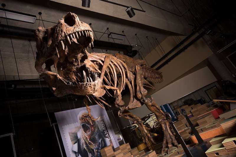 Tìm ra con khủng long bạo chúa lớn nhất lịch sử - vị vua thực sự của loài khủng long khát máu nhất kỷ Jura - Ảnh 1.