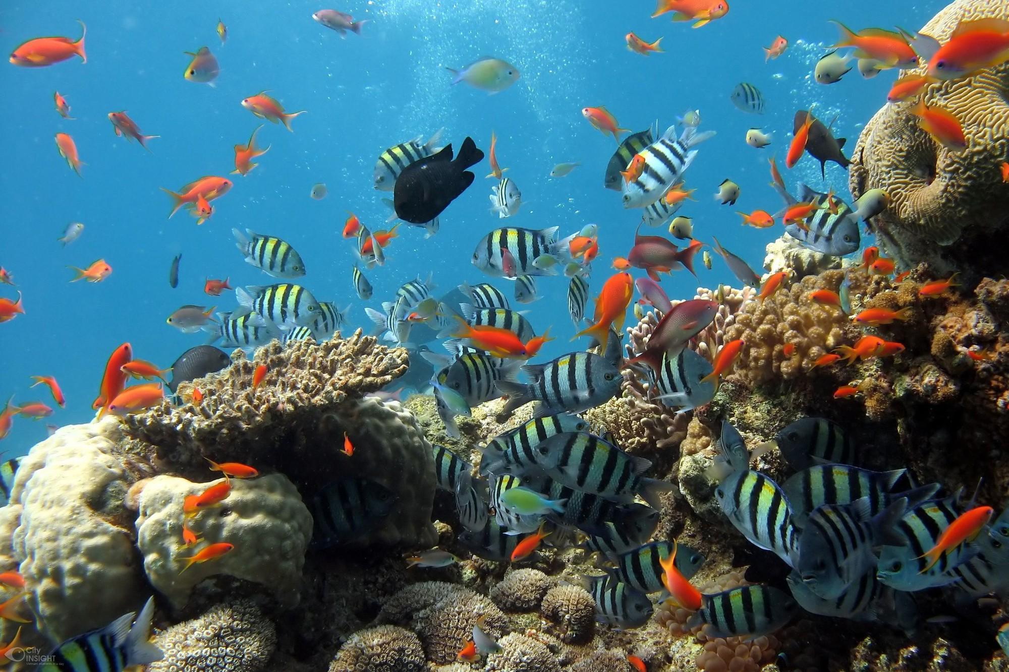 Rùa biển thở bằng phổi, vậy chúng làm thế nào để ăn được dưới nước? Đáp án là sự kỳ diệu của tạo hóa - Ảnh 3.