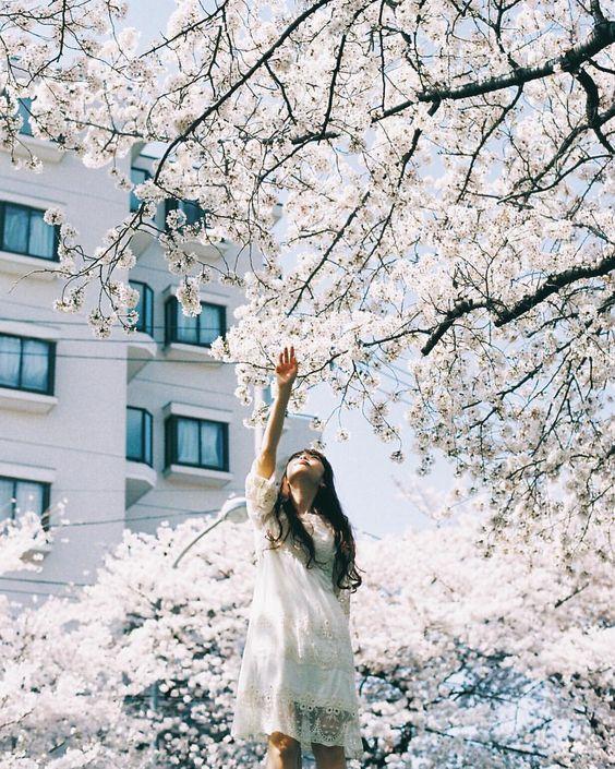 Kana✩さんはInstagramを利用しています:「ㅤ ㅤ 🌸春編はじめます🌸 ㅤㅤ #春が美しすぎて悩んでる場合じゃないあさみ編 ㅤ #flowergirl #flowerstagram #桜 #cherryblossoms #LOMO400 #lomography #contaxaria #contax_kanaria ㅤ」