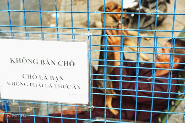 Tấm bảng Chó là bạn, không phải thứ ăn của người đàn ông 20 năm bầu bạn với những chú chó ngoài đường phố Sài Gòn - Ảnh 1.