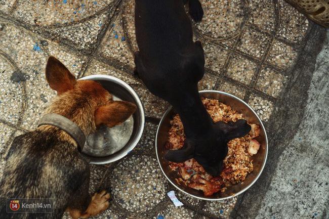 Tấm bảng Chó là bạn, không phải thứ ăn của người đàn ông 20 năm bầu bạn với những chú chó ngoài đường phố Sài Gòn - Ảnh 7.