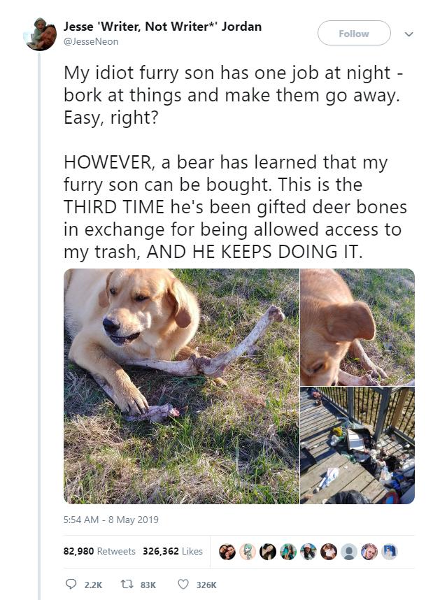 Canada: Bắt quả tang gấu hối lộ xương cho chó để vào nhà dân bới thùng rác - Ảnh 1.