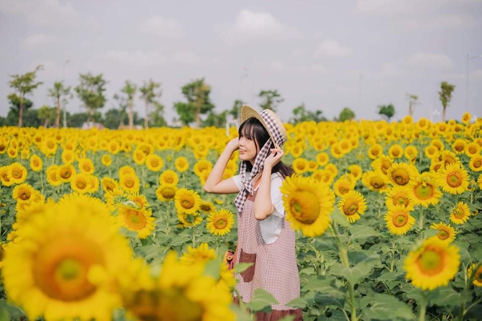 Hốt hoảng trước cảnh tượng hoang tàn của vườn hướng dương hot nhất Sài Gòn: Hoa héo úa, rác ngập tràn khắp nơi! - Ảnh 5.