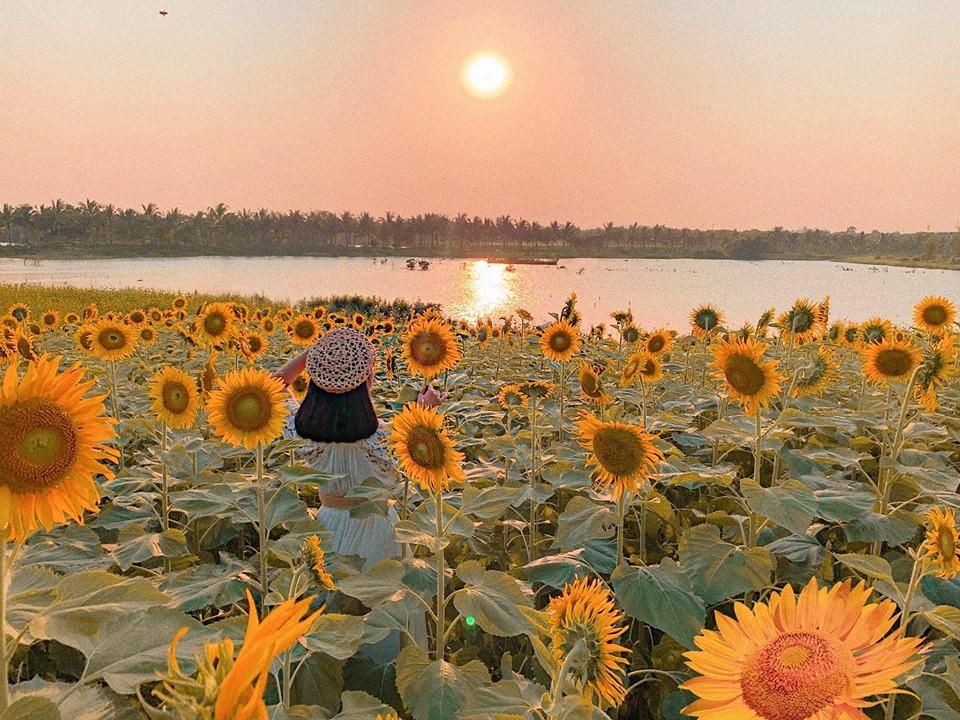 """Lướt mỏi tay loạt ảnh check-in """"thật là vàng tươi"""" của giới trẻ ở vườn hoa hướng dương mới xuất hiện ngay gần Hà Nội, không đi nhanh kẻo phí cả mùa hè - Ảnh 9."""