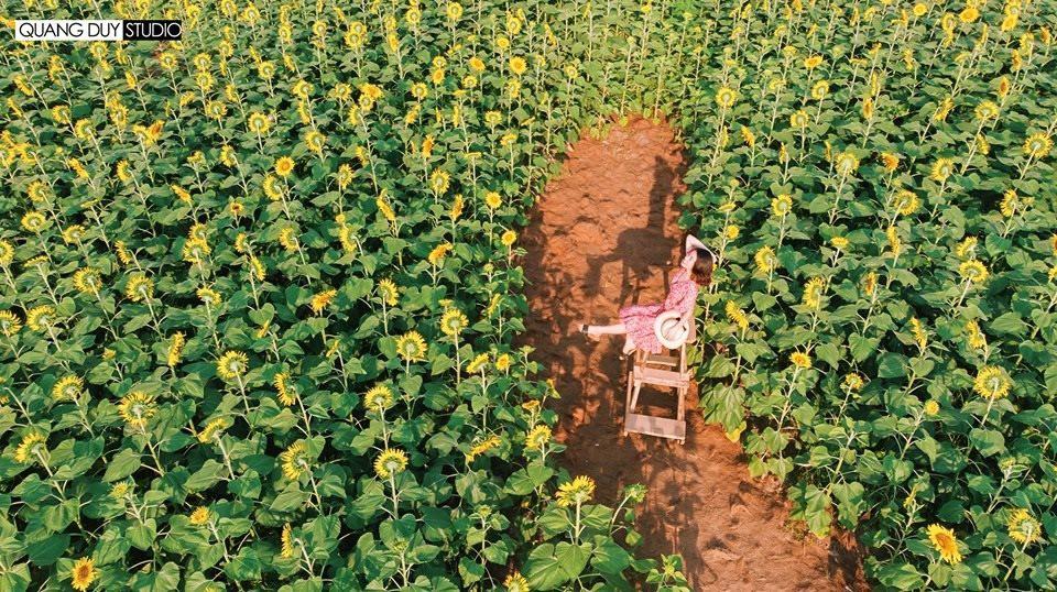 """Lướt mỏi tay loạt ảnh check-in """"thật là vàng tươi"""" của giới trẻ ở vườn hoa hướng dương mới xuất hiện ngay gần Hà Nội, không đi nhanh kẻo phí cả mùa hè - Ảnh 10."""