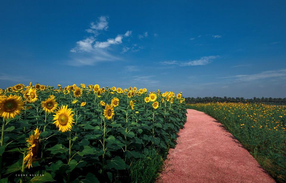 """Lướt mỏi tay loạt ảnh check-in """"thật là vàng tươi"""" của giới trẻ ở vườn hoa hướng dương mới xuất hiện ngay gần Hà Nội, không đi nhanh kẻo phí cả mùa hè - Ảnh 13."""