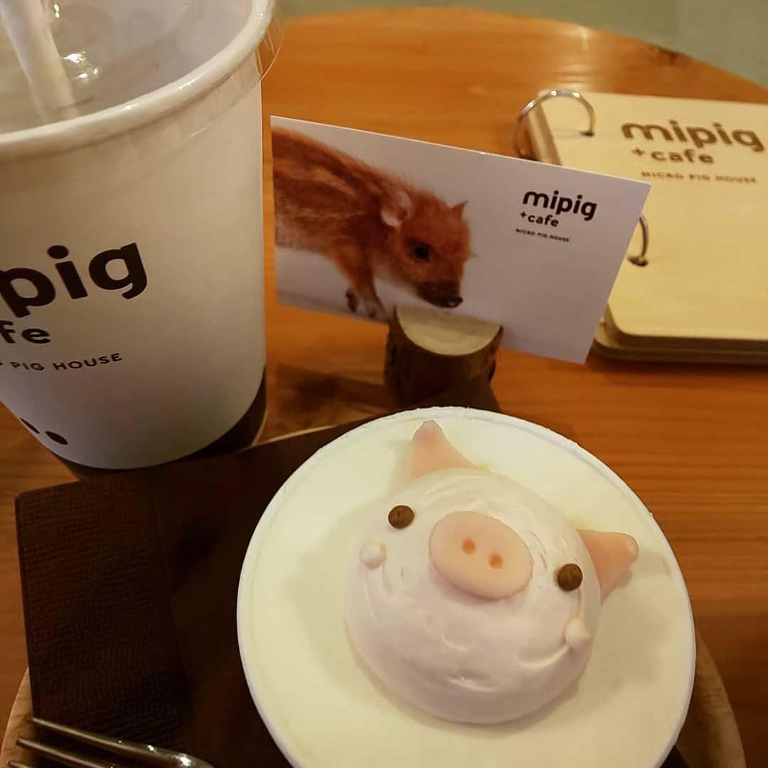 Cà phê chó, mèo thì thấy nhiều rồi. Bạn muốn mới lạ? Chào mừng bạn đến quán cà phê... heo có 1-0-2 ở Nhật Bản! - Ảnh 18.
