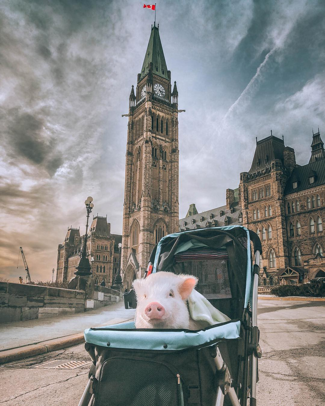 Cảm giác ghen tị là khi bạn phải đi làm vào thứ 2 còn chú lợn này lại được du lịch vòng quanh thế giới - Ảnh 11.