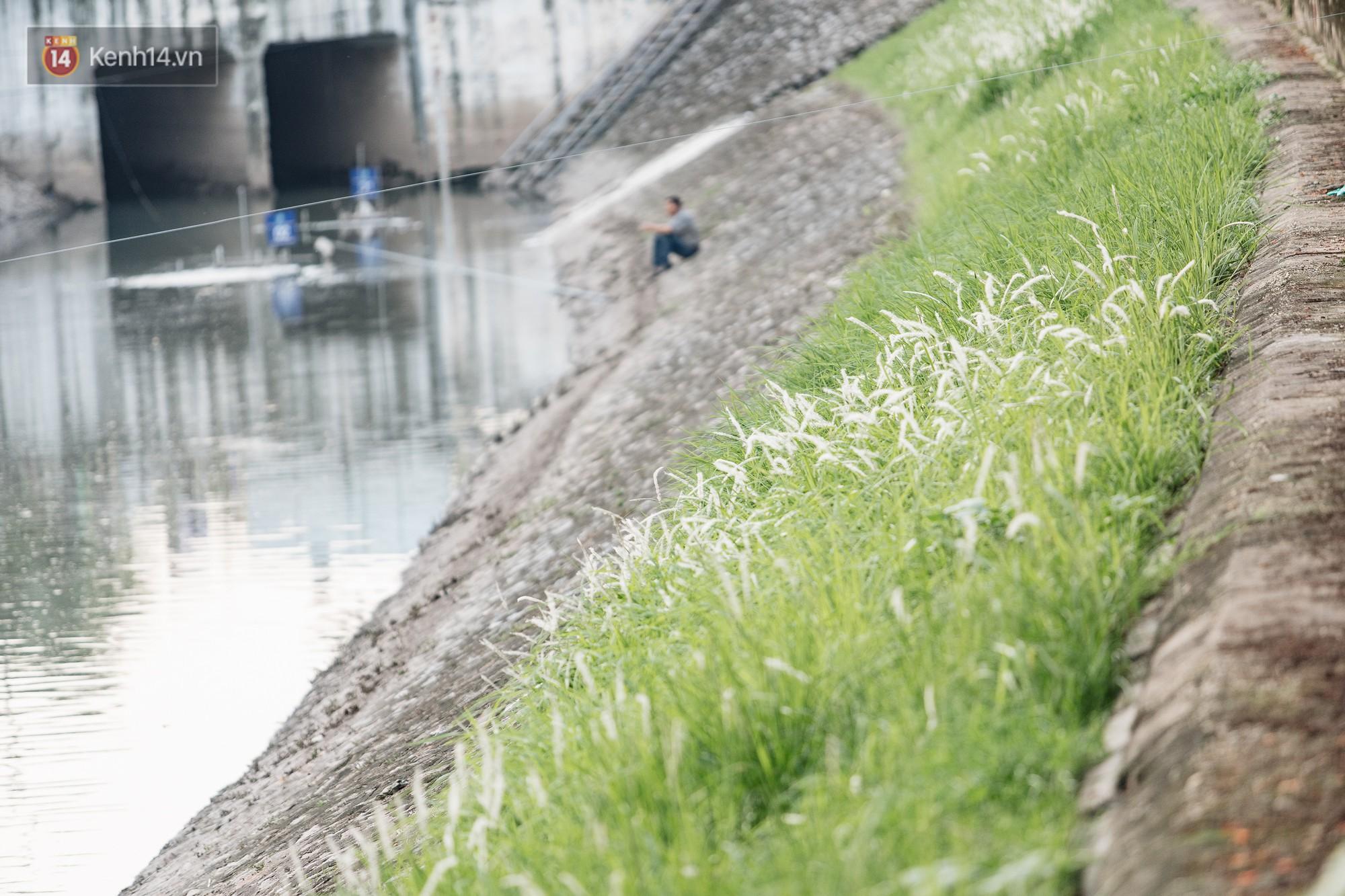 Sông Tô Lịch đổi màu sau khi làm sạch bằng công nghệ Nhật Bản: Hoa lau xanh mướt, người dân thư thả câu cá - Ảnh 6.