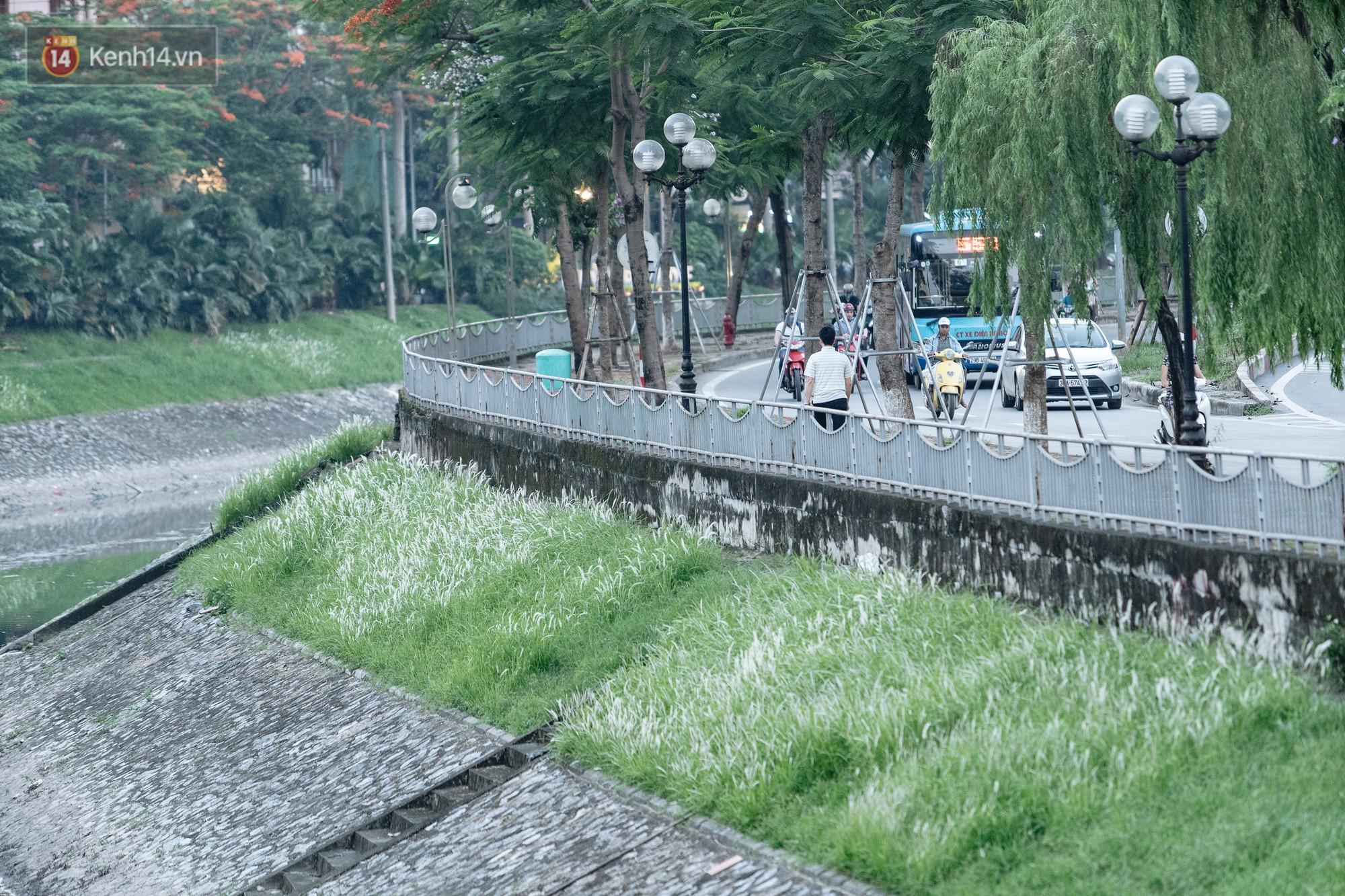 Sông Tô Lịch đổi màu sau khi làm sạch bằng công nghệ Nhật Bản: Hoa lau xanh mướt, người dân thư thả câu cá - Ảnh 8.