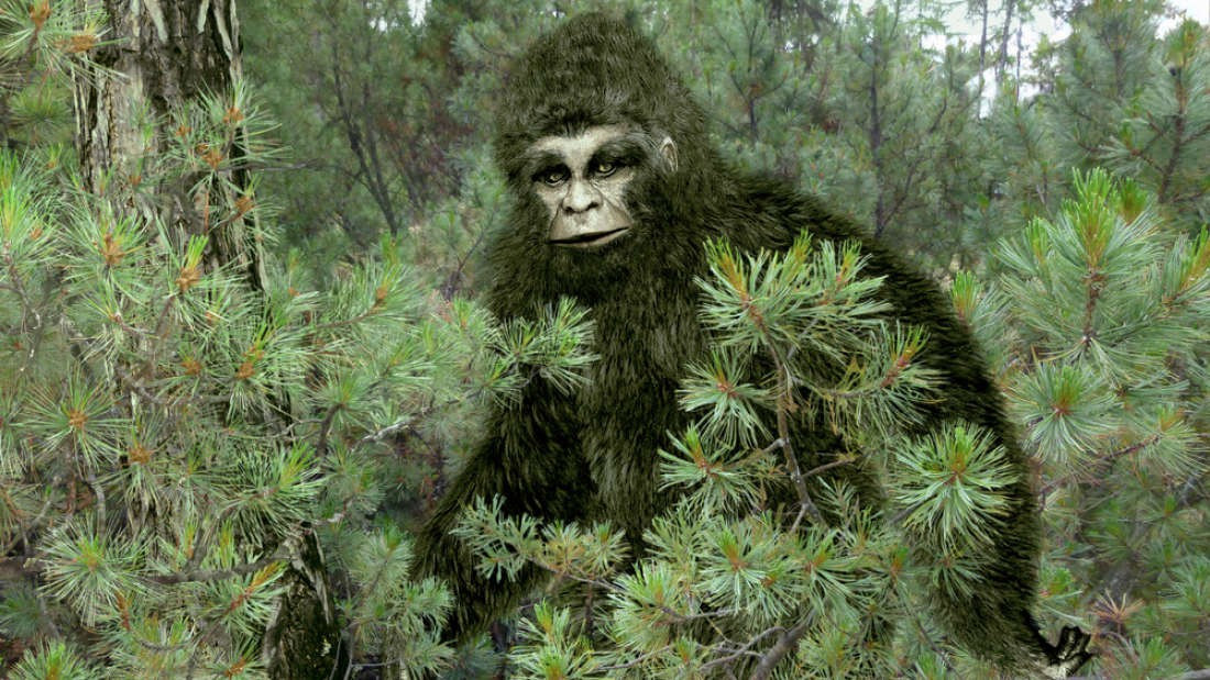 Người đàn ông gửi lông Bigfoot cho FBI đòi phân tích, 40 năm sau mới nhận được đáp án lúc gần đất xa trời - Ảnh 1.