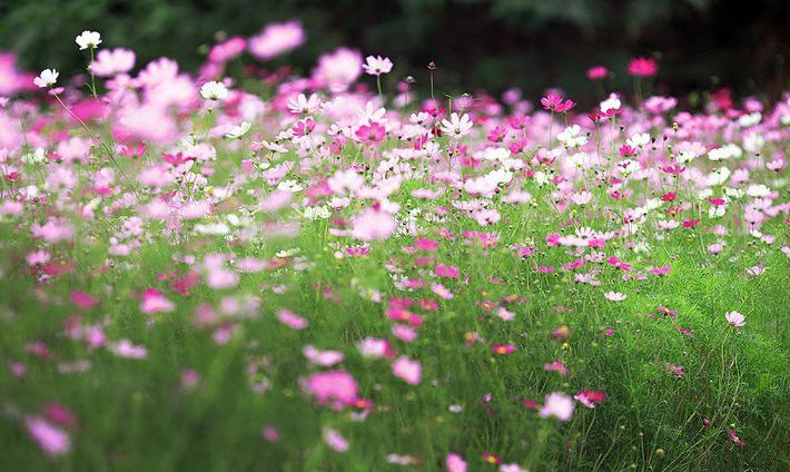 Nhiều người lựa chọn 5 giống hoa này để trồng trong nhà vì chỉ cần cắm xuống là mọc tốt um - Ảnh 4.