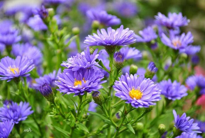 Nhiều người lựa chọn 5 giống hoa này để trồng trong nhà vì chỉ cần cắm xuống là mọc tốt um - Ảnh 5.