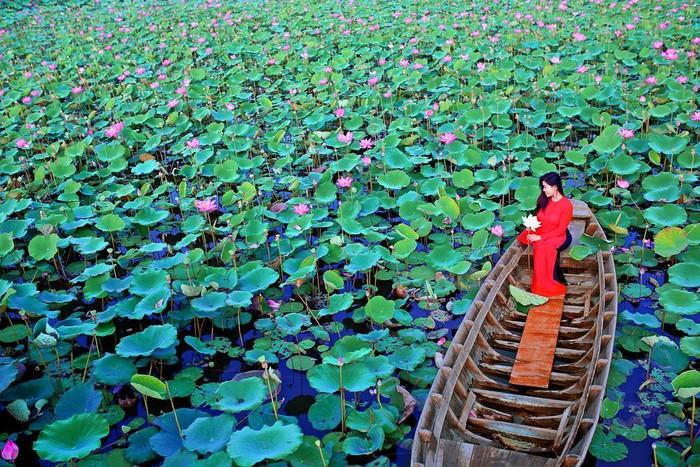 Ngẩn ngơ trước những cánh đồng sen đẹp nhất Việt Nam