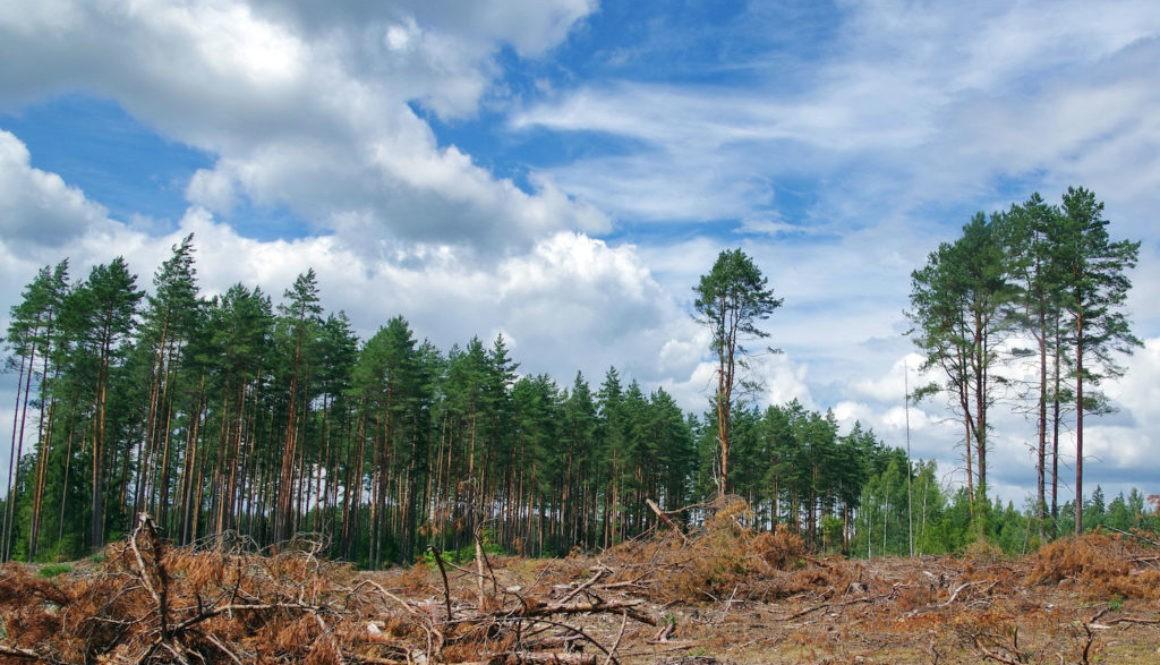 Cây cối sẽ tuyệt chủng ít hơn hiện giờ đến 500 lần nếu loài người không tồn tại - Ảnh 2.