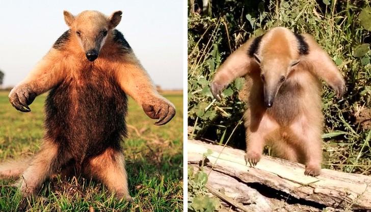 8 loài vật có ngoại hình tưởng sai trái nhưng thực ra lại là cục vàng trong làng tiến hóa - Ảnh 3.