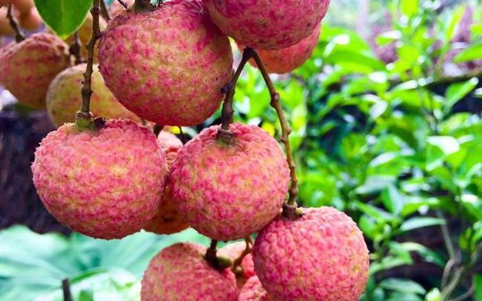 6 mẹo ăn vải thiều không bị nóng và ngộ độc