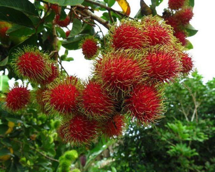 Lợi ích bất ngờ của loại quả mùa hè quen thuộc có đầy rẫy ở Việt Nam