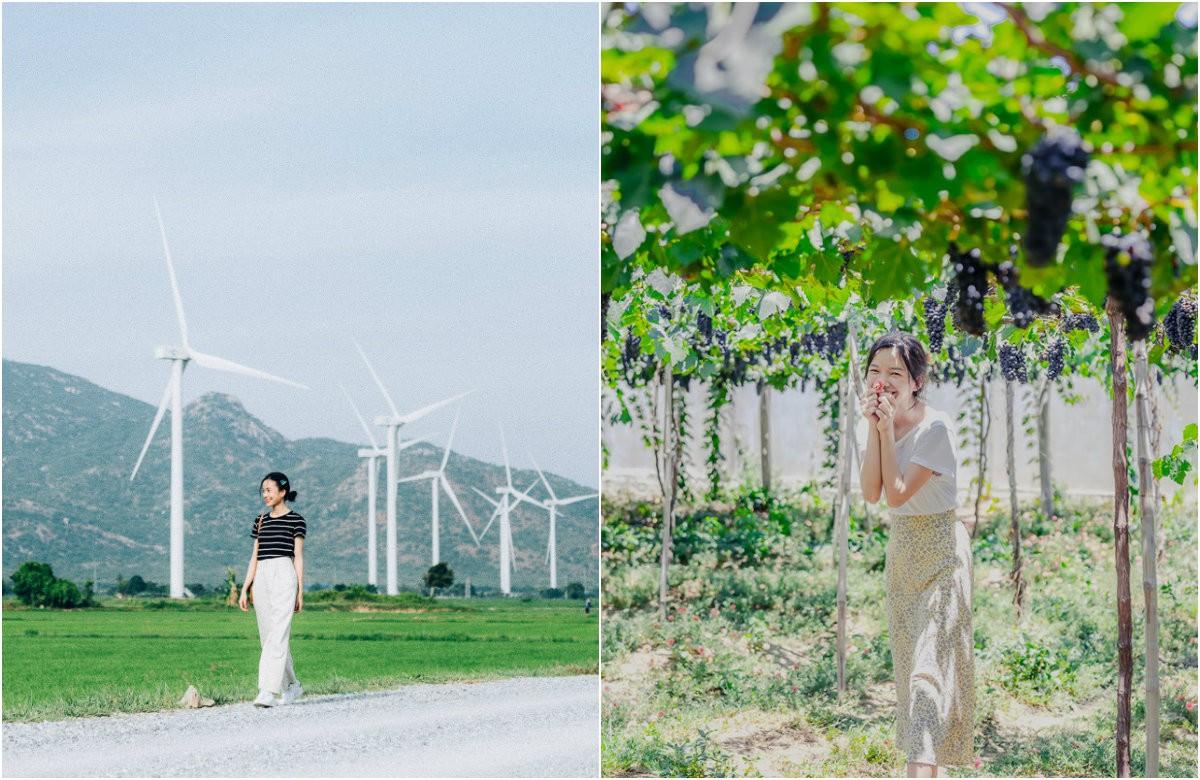 Cánh đồng quạt gió và vườn dâu Ba Mọi tại Ninh Thuận: Hai địa điểm check-in siêu to khổng lồ, lại còn miễn phí nữa chứ! - Ảnh 1.